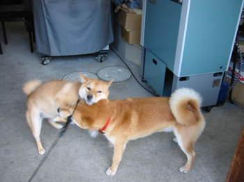 マルとリキちゃん2002.jpg