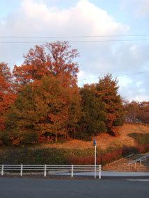 平和公園紅葉1.jpg