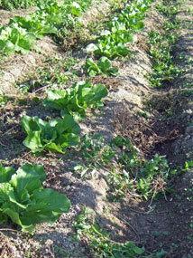 田中農園2012.11b.jpg