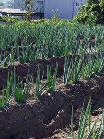田中農園2012.11e.jpg