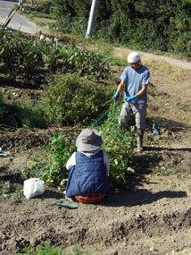 田中農園2012.11l.jpg