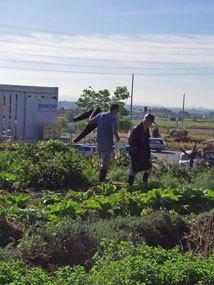 田中農園2012.11m.jpg