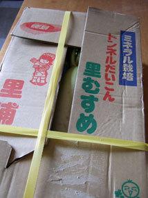 徳島大根3.jpg