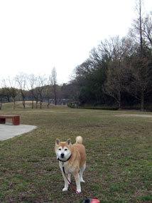 田中農園2013.3l.jpg
