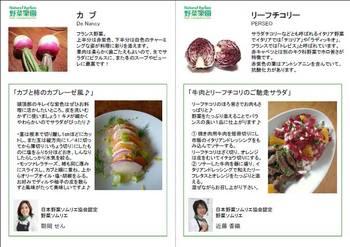 POPチーフチコリ&カブ.jpg